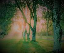 light-trees